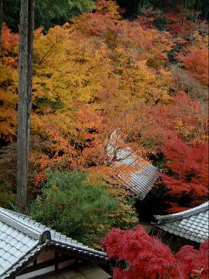 屋根と紅葉2