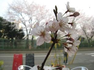 09Aprアリーカフェ桜