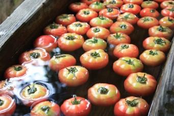 平湯朝市トマト