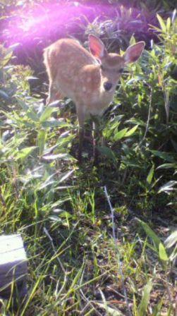 65.鹿追の鹿♪