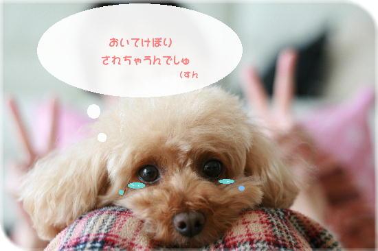 IMG_6508a.jpg