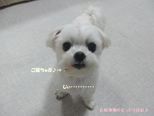 CIMG0270_20110404144253.jpg