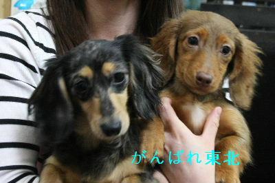 IMG_9469子犬ちゃん