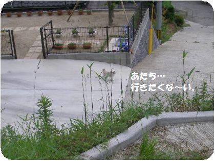 IMGP1159_1.jpg
