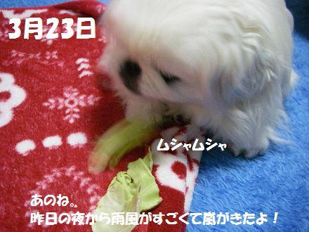 IMGP2826_3.jpg
