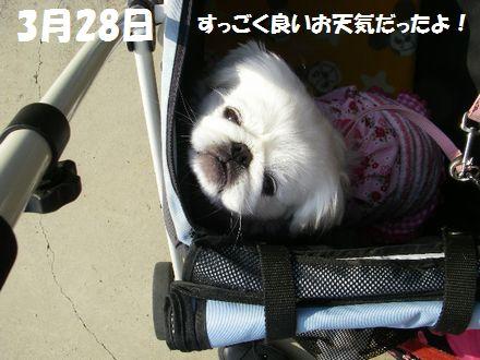 IMGP3246_3.jpg