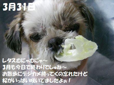 IMGP3519_5.jpg