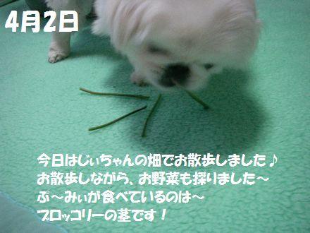 IMGP3719_3.jpg