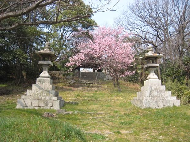 鐘門下の桜