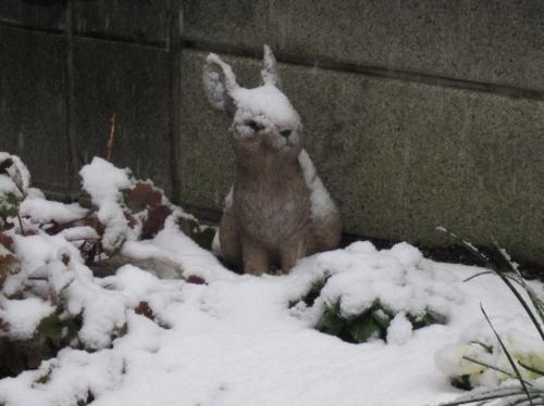 雪かぶりウサギ朝