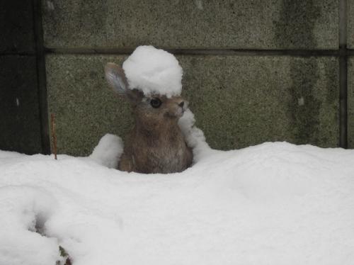 雪かぶりウサギ昼