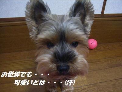 RIMG0895.jpg