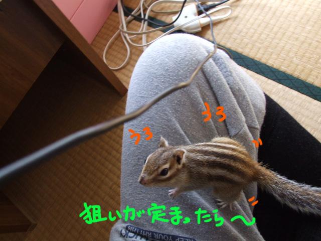 DSCF110224a1007.jpg