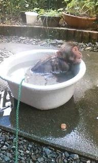 ききお風呂