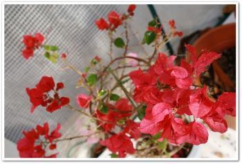 004_20090115094432.jpg
