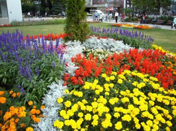 大通公園花壇2