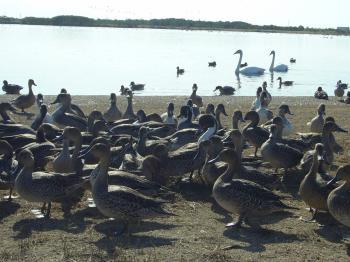 ウトナイ湖1