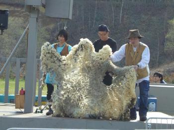 毛刈りショー2