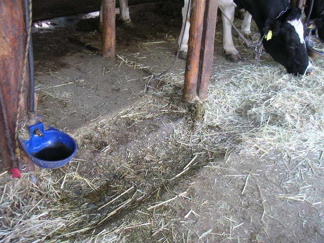 牛床を前に伸ばす