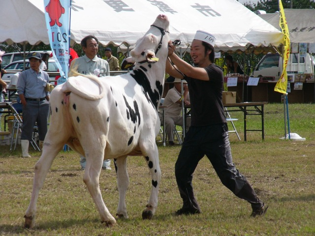 牛と格闘する仁君