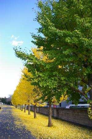 黄色のじゅうたん2
