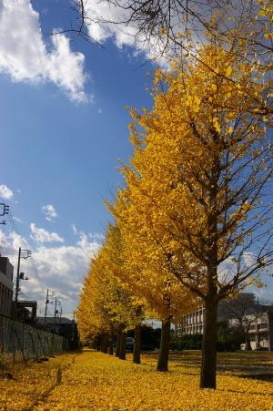 黄色のじゅうたん4