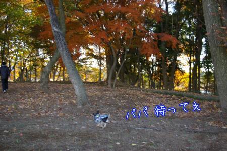 秋のお散歩3