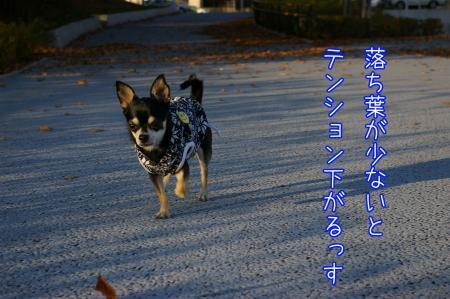 秋のお散歩4