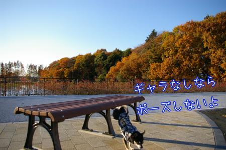 秋のお散歩5