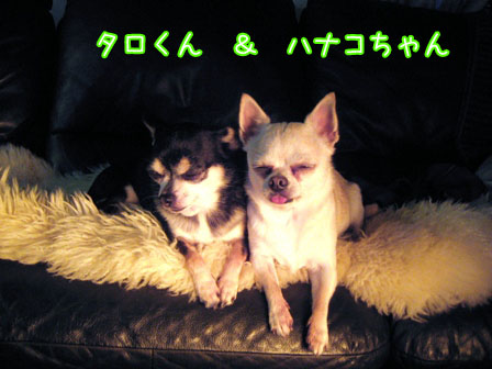太郎と花子?1