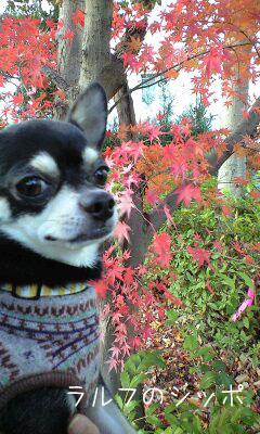 秋も終わりだね2
