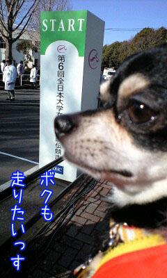 マラソン犬1