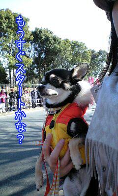 マラソン犬2