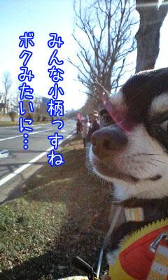 マラソン犬4