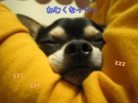 ブサイク犬5