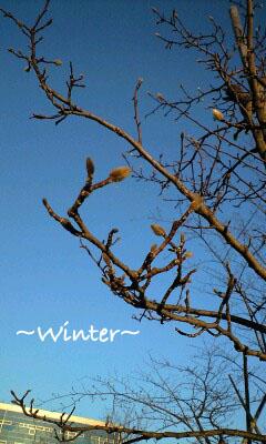 季節を感じるとき3