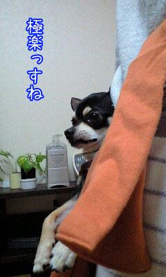 カンガルー犬2