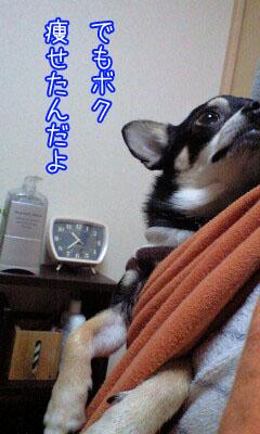 カンガルー犬4