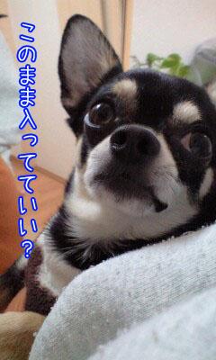 カンガルー犬6