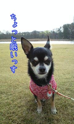 めざまし散歩2