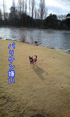 めざまし散歩3