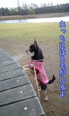 めざまし散歩4