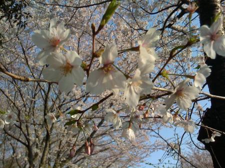 花より団子3