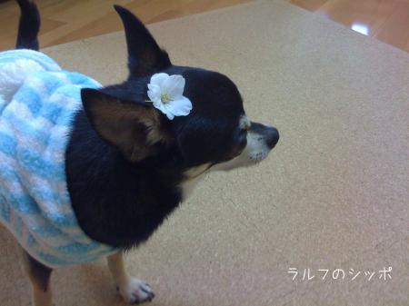 花より団子7