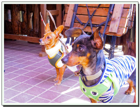 blog20120304b.jpg
