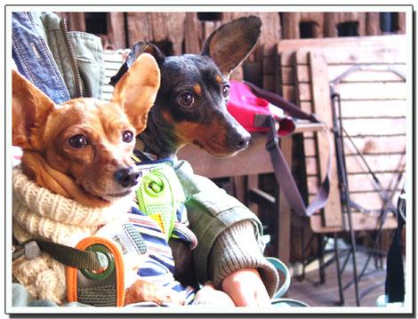 blog20120304h.jpg