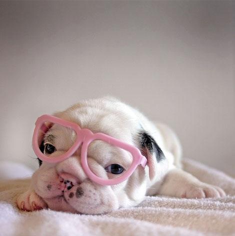 ピンクのめがね