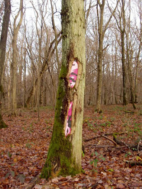 木の中はアート - SamuelFrançois