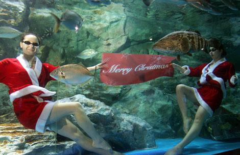 韓国ソウルの水中クリスマスショー