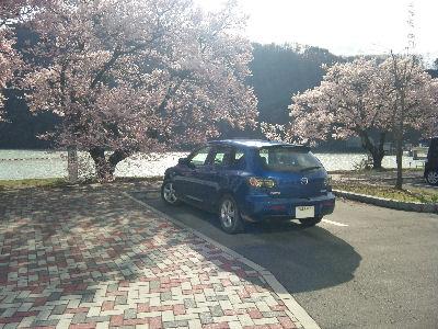アクセラと桜と美和ダム